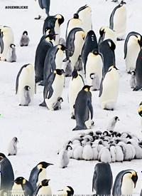 Titelbild der Ausgabe 1/2020 von AUGENBLICKE: Im Kindergarten der Pinguine. Zeitschriften als Abo oder epaper bei United Kiosk online kaufen.