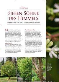 Titelbild der Ausgabe 5/2019 von KLEINE HAUSBÄUME: SIEBEN SÖHNE DES HIMMELS. Zeitschriften als Abo oder epaper bei United Kiosk online kaufen.