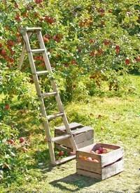 Titelbild der Ausgabe 40/2020 von GUT ZU WISSEN: Süße Liebli: Ängepfel. Zeitschriften als Abo oder epaper bei United Kiosk online kaufen.