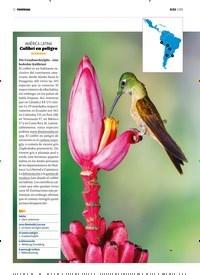 Titelbild der Ausgabe 1/2019 von PANORAMA: AMÉRICA LATINA: Colibrí en peligro: INTERMEDIO. Zeitschriften als Abo oder epaper bei United Kiosk online kaufen.